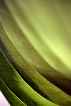 Abstract Leaf van