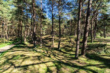 In het bos op de Schaabe, Glowe op het eiland Rügen van GH Foto & Artdesign