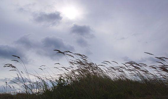 gras helmen in de duinen  van Dirk van Egmond