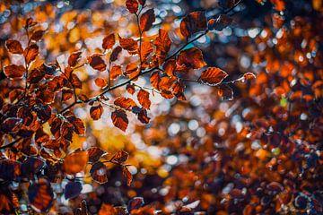 Herfstkleuren.02 (2x3) van Timo Bergenhenegouwen