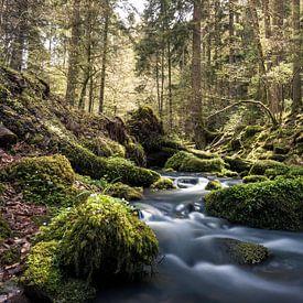 Frühligskraft von Severin Frank Fotografie