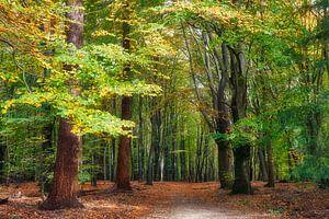 Bomen in het bos tijdens de herfst periode van eric van der eijk