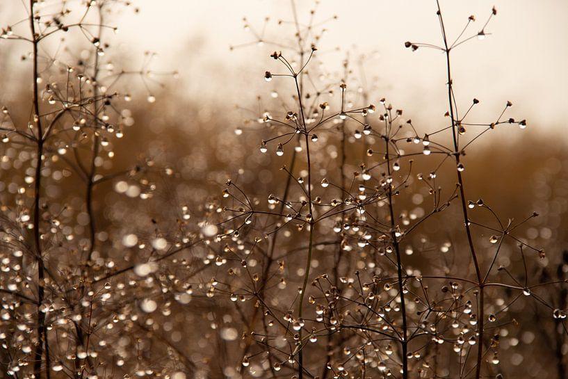 Planten met waterdruppels op een half mistige dag in december van Jacoline van Dijk