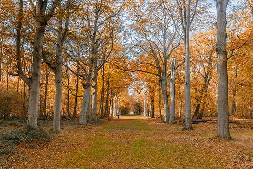 Herfst kleuren in het bos van