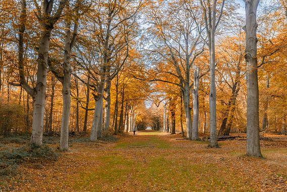 Herfst kleuren in het bos van Menno Schaefer