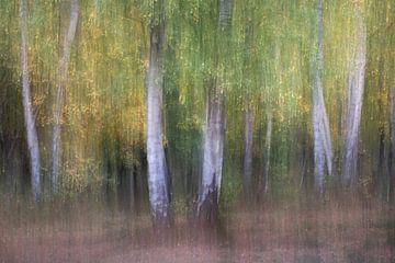Birch forest van Christl Deckx