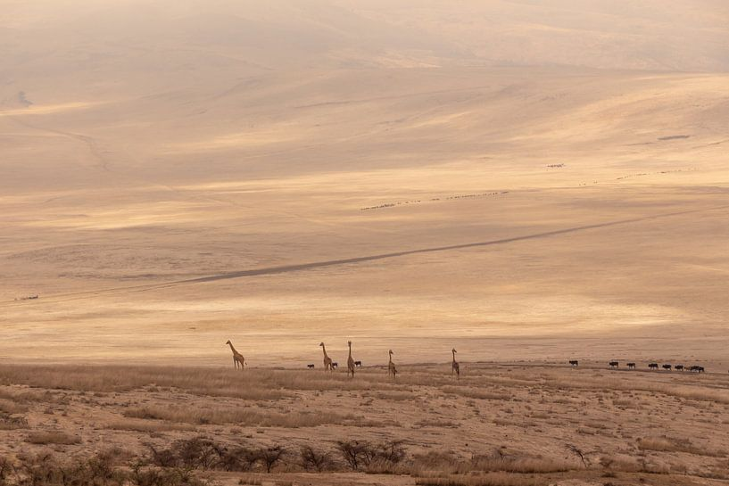 Giraffen in Ngorongoro Crater van Mickéle Godderis