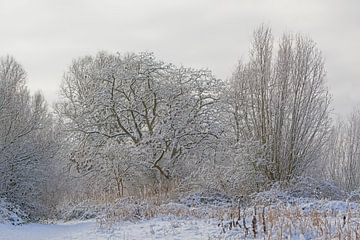 Winterse bomen bedekt met sneeuw van Kristof Lauwers
