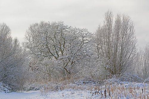 Winterse bomen bedekt met sneeuw van