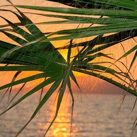 zons ondergang tussen de palmbomen von jan van Welt