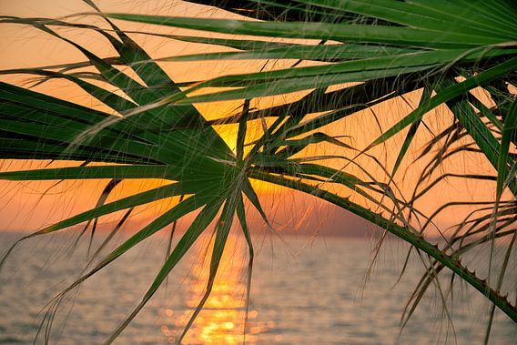 zons ondergang tussen de palmbomen