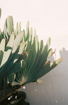 Botanische tuin in Stellenbosch |  Botanische foto print voor aan de muur van Emma van der Schelde