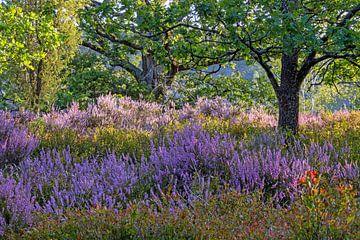 Lüneburger Heide in de bloeitijd van de heide van Katrin May