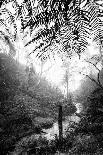 Regenwoud in de mist XII van Ines van Megen-Thijssen