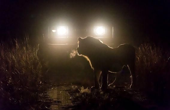 Night Encounter! van Claudia van Zanten