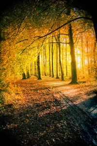 gouden herfst en natte weg