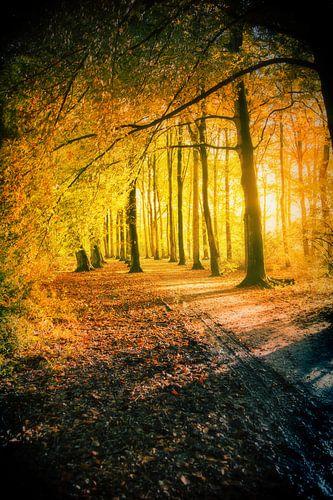 gouden herfst en natte weg van