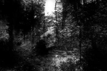 Serie verloren gevoel, beeld 4 van Noortje Zoomers