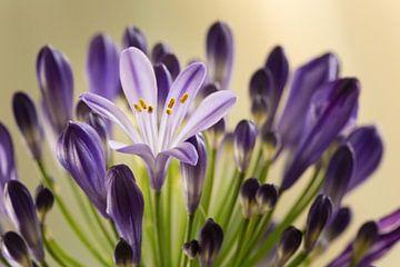Blumen von Rob Bergman