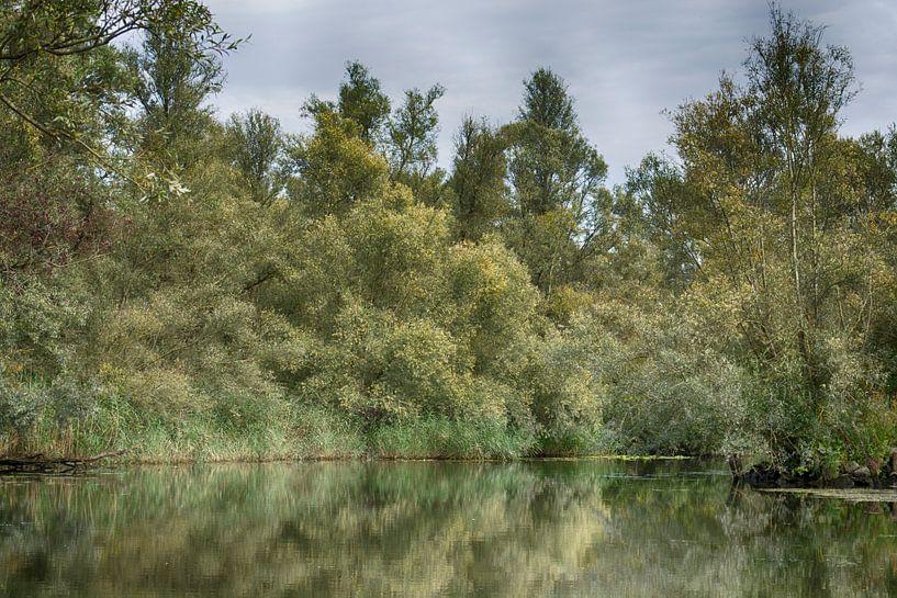 Weerspiegeling in de Biesbosch van Hanneke Duifhuize