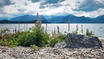 Blumen am Manapouri-See von Wim van Berlo