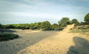 Open Zandvlakte Op De Drentse Heide