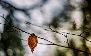 Herfstkleuren.05 (16x10) van Timo Bergenhenegouwen