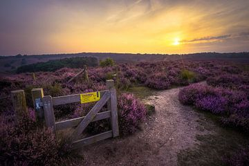 Tor auf dem Moor von Roelof Nijholt