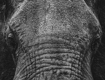 Nahaufnahme Elefantenkopf in schwarz und weiß von Erwin Floor