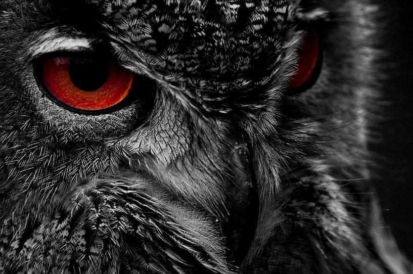 Birds of prey van Mees Tempelaar