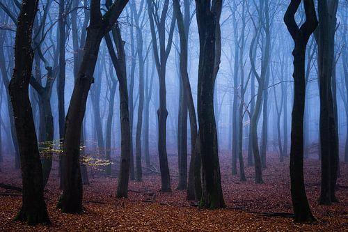 Velours bleu sur Tvurk Photography