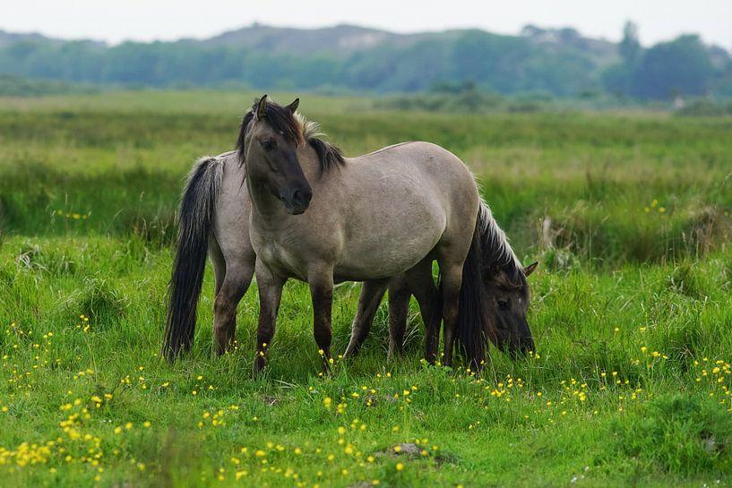 Paarden op Lentevreugd van Dirk van Egmond