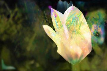 Lente tulp collage van Marianna Pobedimova