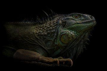 Little Godzilla von Ron Meijer