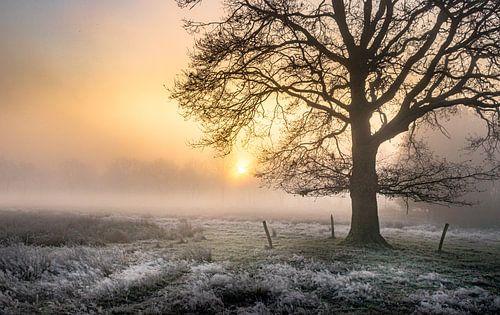 Wintereik in de mist