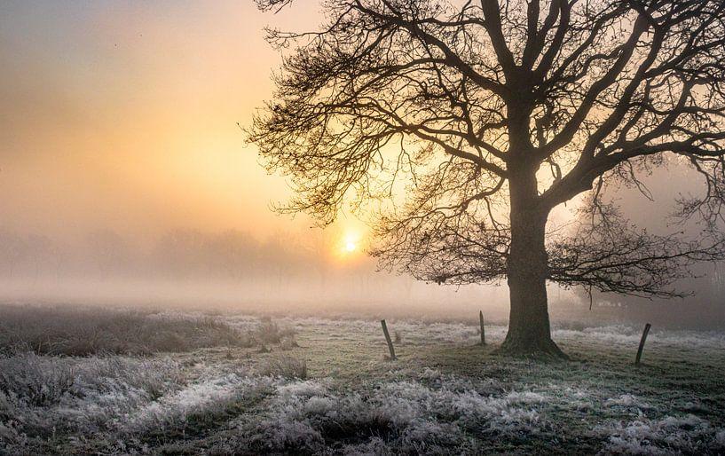 Wintereik in de mist van Peschen Photography