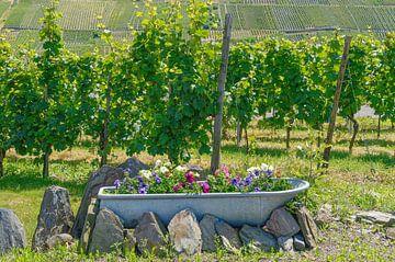 Idylle dans les vignobles de la Moselle