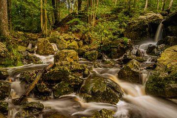 Cascade des Nutons: Ein kleiner Wasserfall in den Ardennen im Herbst von Bert Beckers