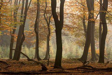 herfstbos van Contrast inBeeld