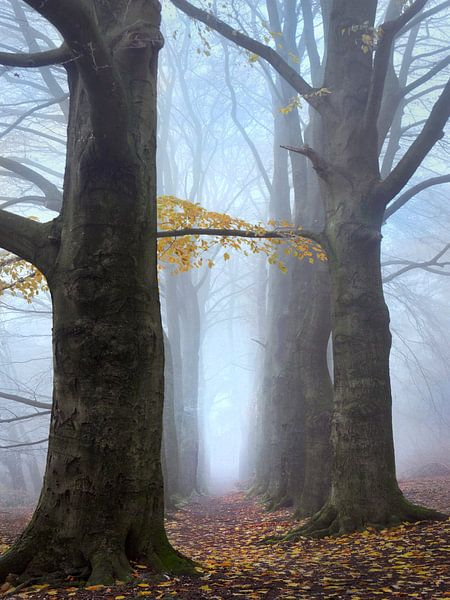 Bospad in de mist van Ton Schrederhof