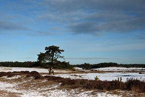 Besneeuwd landschap met een boom