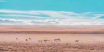 Lamas in Argentinien von Hege Knaven-van Dijke