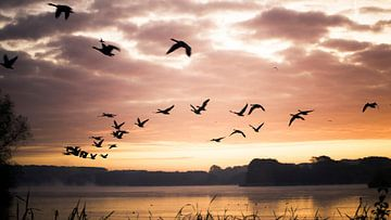 Vogels in de ochtendzon sur Jonas Demeulemeester