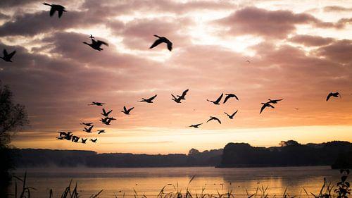 Vogels in de ochtendzon von Jonas Demeulemeester