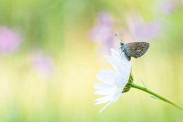 Vlinder in de dauw van Francis Dost