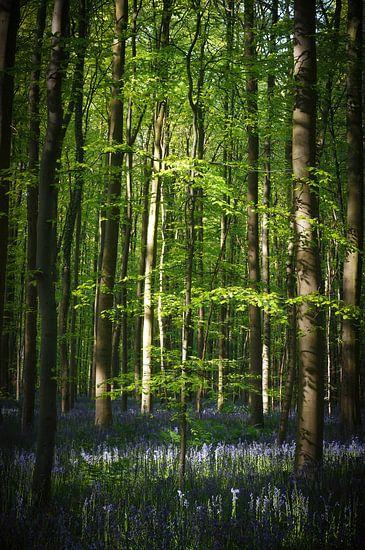 Het omringde boompje van Joris Pannemans - Loris Photography
