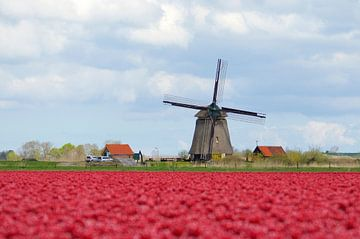 Niederländischer Stolz auf ein Blumenzwiebelfeld von Willem Holle WHOriginal Fotografie