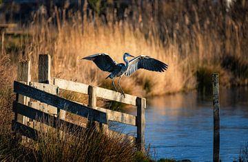Blauwe reiger van Rob Wareman Fotografie