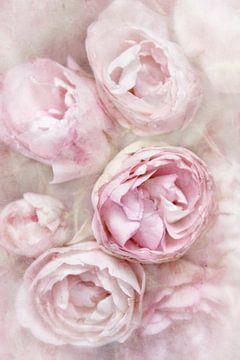 Hochzeitsrosen von Claudia Moeckel