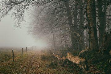 Neblige Waldlandschaft mit Zaun
